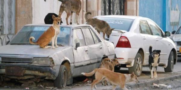وفاة وإصابة عشرات الأطفال بعضات كلاب مسعورة في ذمار.. والأهالي يناشدون